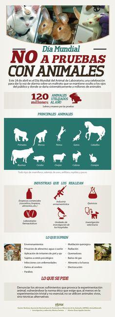 #SabíasQue 120 millones de animales son utilizados al año para pruebas de laboratorio
