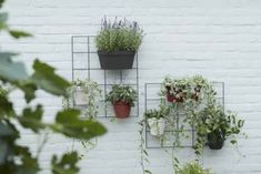 Urban Loft, Wall Racks, Planter Pots, Sweet Home, Garden, Inspiration, Home Decor, Black, Plants