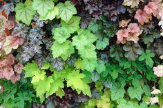 10 plantes vivaces d'ombre pour composer un massif - Promesse de Fleurs Anemone Du Japon, Geranium Vivace, Herbs, World, Pins, Flowers, Deco, Garden, Shade Garden Plants