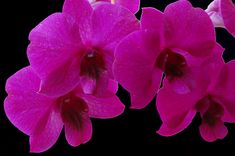 Photography by Aimee L Maher #orchid #floral #flower http://aimee-maher.artistwebsites.com/featured/orchid-song-aimee-l-maher-photography-and-art.html