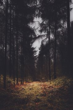 'Dark Forest' - By Freddie Ardley Photography