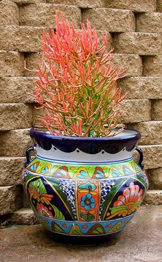Euphorbia tirucalli (firestick) planted in a Talavera pot. Talavera pottery is made in Mexico exclusively in the State of Puebla with the same techniques used in the 16th century.