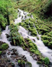 Stream above Wahkeena