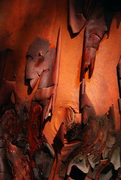 Arbutus bark by whipstar