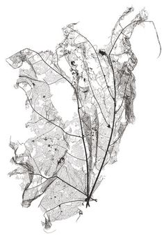 Beauty in Decay - skeleton leaf; Natural Structures, Natural Forms, Patterns In Nature, Textures Patterns, Organic Patterns, Object Photography, Nature Photography, Leaf Skeleton, A Level Art