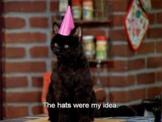 funny Sabrina the teenage witch salem salem the cat Sabrina Cat, Salem Cat, Salem Saberhagen, Cat Toilet Training, Memes, My Spirit Animal, Reaction Pictures, Funny Cute, Hilarious