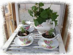 Shabby Jen tea cup planters- i think i would try succulents.