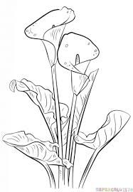Image result for calla lily drawings in black and white