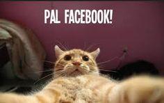Resultado de imagen para imagenes de gatos graciosos