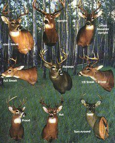 Deer Mounting Options, i like proud or upright Whitetail Deer Hunting, Deer Hunting Tips, Hunting Girls, Bow Hunting, Hunting Stuff, Hunting Decal, Hunting Humor, Deer Shoulder Mount, Deer Tags