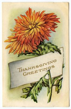 Vintage Thanksgiving Clip Art - Mums - Placecard - The Graphics Fairy