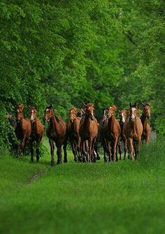 A beautiful herd of horses.