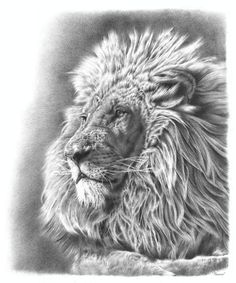 Photorealistic pencil drawing of a lion by Remrov