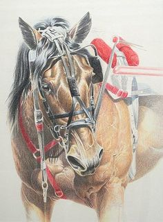 Portrait of Harness Racing Horse by Carrie L. Lewis 11″ x 14″ Original Colored Pencil Painting Ivory Mat Board
