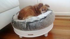 Koiran petiin sänky | Huonekalut netistä, meiltä kotiisi lipastot, senkit, kaapit, tuolit, pöydät, valaisimet ja peilit. Paljon valkoisia ka...