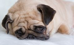 Dogs Who Mourn: Meet 4 Who Openly Grieved the Loss of Their Humans