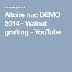 Altoire nuc DEMO 2014 - Walnut grafting - YouTube