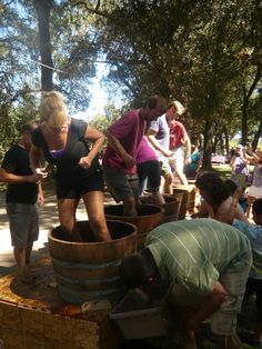 Experience harvest at AVV - old fashioned grape stomping and more - Sept. 14, 2013