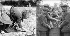 #Cilento (.....) .....Lo scambio di aiuto reciproco nei lavori tra le famiglie contadine, anche in questo caso, rappresentava uno dei più importanti aspetti ....(.....)