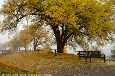 Idaho, North, Coeur d'Alene. Autumn leaves scatter on the Centennial Trail along the North Shore of Lake Coeur d'Alene on a foggy day in autumn.
