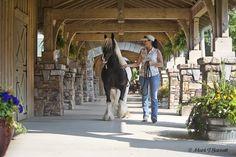 Stillwater Farm: Our Farm - Gypsy Vanner Horses - Cashiers, North Carolina