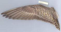 bird wings - Google Search