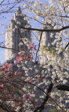 Spring :) ....... The San Remo Building from Central Park, NYC ...... Kur <3