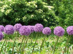 Você nao precisa de produtos quimicos perigosos para acabar com os insetos - basta usar estas plantas!