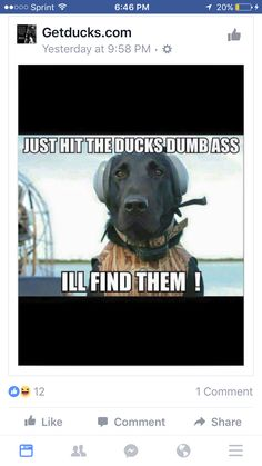 Deuce ❤ Duck Hunting Dogs, Duck Hunting Blinds, Hunting Humor, Hunting Quotes, Black Lab Puppies, Dogs And Puppies, Dog Jokes, Waterfowl Hunting, Cool Pets