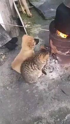Cute Little Animals, Cute Funny Animals, Cute Cats, Funny Cats, Kittens Cutest, Cute Animal Videos, Funny Animal Pictures, Happy Animals, Animals And Pets