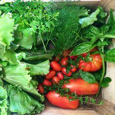 Summer evening harvesting: salad tomatoes and spices // Raccolta estiva serale: insalata pomodori e spezie