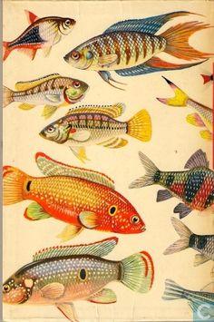 Boeken - Meulenhoffs Natuurgidsen - Aquariumvissen in Kleuren