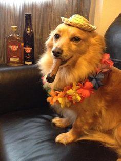 El cubanito dog