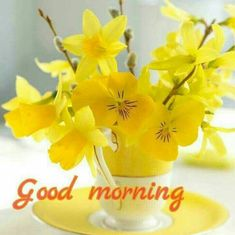 Good Morning images with Flowers that most beautiful and heart touching. share Good Morning images with Flowers with your friends and family. Good Morning Beautiful Flowers, Good Morning Images Flowers, Good Morning Picture, Good Morning Messages, Good Morning Greetings, Good Morning Good Night, Morning Pictures, Morning Quotes, Good Morning Wishes Gif