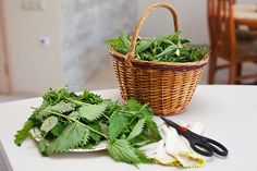 Nettle is a powerful herb to stop hair loss and stimulate new growth. Rich in phytonutrients, Nettle enhances blood flow to hair as well as blocks DHT. Herbal Remedies, Home Remedies, Natural Remedies, Cow Parsley, New Hair Growth, My Plate, Organic Herbs, Zucchini Bread, Plantation