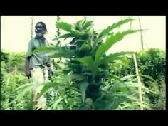 Israel Vibration - Herb Is The Healing #w33daddict #HighTunes #GanjaTunes