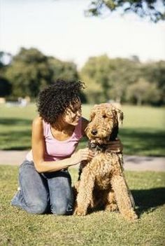 """Training Tips.  The Airedale is known as the """"all-in-one"""" dog - hunter, herder, guardian and devoted family member."""