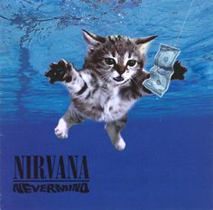 The Kitten Covers: Nirvana (http://thekittencovers.tumblr.com/)