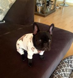 A Frenchie in pajamas omg.