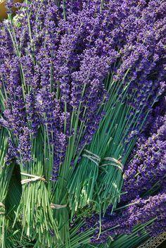 Lavender:  #Lavender.