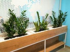 Amenajare birou cu zamioculcas si sansevieria! Extra pietre decorative albe pentru contrast. Interior Design, Plants, Nest Design, Home Interior Design, Interior Designing, Home Decor, Planters, Home Interiors, Interiors