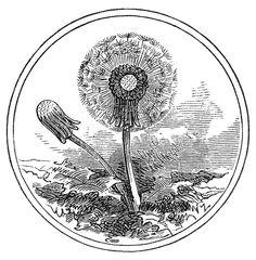 The Graphics Fairy: dandelion