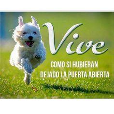 Vive con ganas, con alegría, con intensidad, con tenacidad, con rumbo y sin voltear atrás. #FraseDelDíaCVP #ServiciosCVP #Mascotas #CVP #PetLovers #Pets #Perros #Gatos #Dogs #Cats #Mascotagram #Petstagram #PetShop #DogLovers #CatLovers #NoAlMaltratoAnimal #LovePets #Instapet #ILoveMyPet #DogLife #Veterinaria