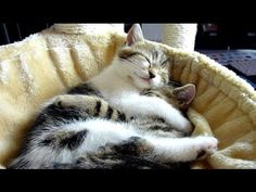 Ridiculously cute...and you don't even need to buy kitty litter to enjoy it: Top 20 Cats Hugs . Cutest Cat Moments.