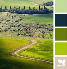 country green design seeds hues tones shades  color palette, color inspiration cards #hues #tones #shades #colorpalette #colorinspiration #designseeds