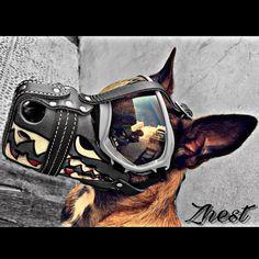 Love & Spirit Zhest)  - - #malinois #gun #super #lotus #k9#belgin #police #rottweiler #germansheperd #germany #lover #show #doberman #malinois #toys #dogslover #saudi #qatar #oman #kuwait #uae #BELGIN #gulf #country #live #club  #malinois @workingdogmagazine @workingdogsofig @workingdogdrygoods