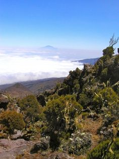 Kilimanjaro: Machame Day Two