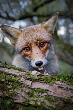 Wildlife Photography 3