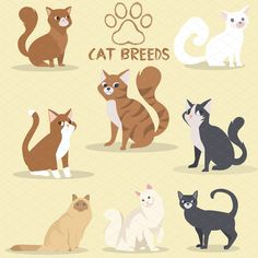 Cat Breeds  by Den Marty Studio on @creativemarket