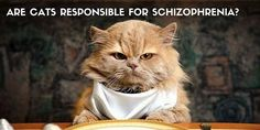 Are Cats Responsible for Schizophrenia?